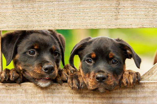Anagrafe Canina, appuntamento mercoledì 22 maggio