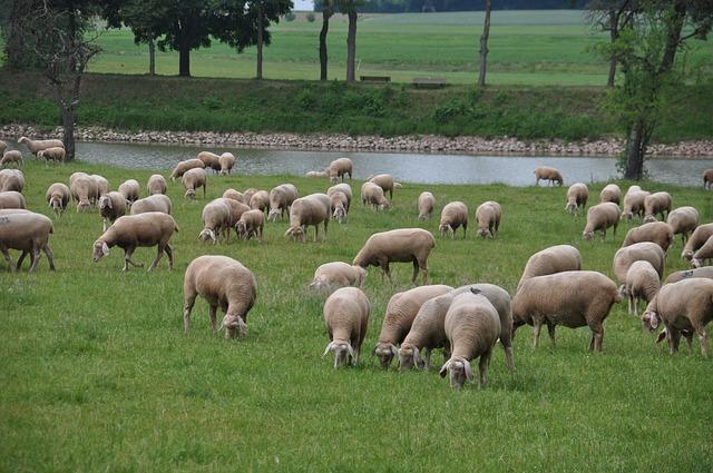 Aiuti in favore delle aziende agricole diffusione febbre catarrale degli ovini (blue tongue)